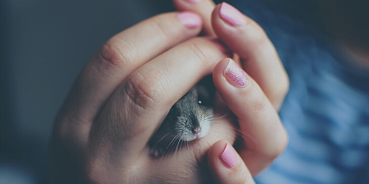 small-pets-for-children-mouse